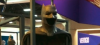 Batsuit banner copy